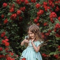 Роза :: Елена Деева