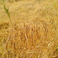 Лето. Сухие травы. :: Татьяна Королёва