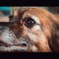 Моя собака. :: Вадим Басов