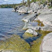 Прозрачные воды Ладоги :: Ирина Ярцева