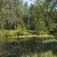 Лесное озеро. :: Елена Струкова