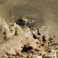 Лягушка- квакушка :: Надежда