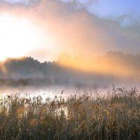 утро  на болоте :: Василий Иваненко