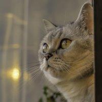 Клёпа наблюдает закат. :: Виктор Орехов