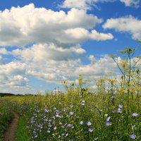 Тропиночка узкая в поле бежала... :: Евгений Юрков