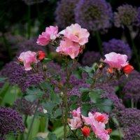 В саду :: Ольга Беляева