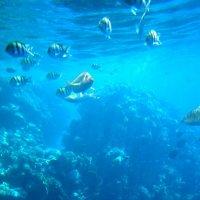 Египет. Красное море :: Андрей Л.