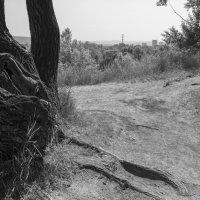 Экологическая тропа :: Валерий Михмель