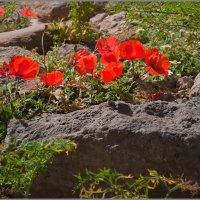 Весной в Греции... :: Lmark