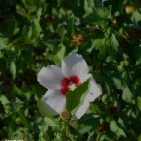 любить и защищать вот мой девиз и солнца! :: Роза Бара