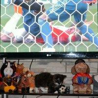 Кто смотрит, а кто играет в футбол. :: Михаил Столяров