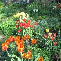 В майском саду :: Антонина Балабанова