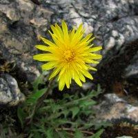И на камнях растут цветы :: OLLES