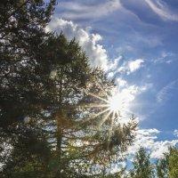 Летнее солнышко :: Нина Кутина