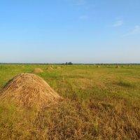 Травы, травы... :: Надежда