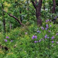 Лесные цветы :: Юрий Стародубцев