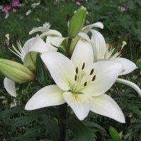 Прекрасный цветок :: Дмитрий Никитин