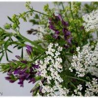 Эти скромные цветы :: OLLES