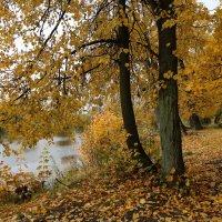 Была осень... :: ZNatasha -