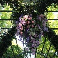 Летний сад. Цветочная ассамблея :: Наталья Герасимова