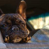 Моя собака :: Михаил Лебедев