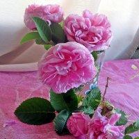 Мои розы :: Лариса