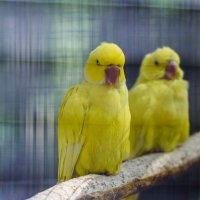 Angry birds! :: Uliya