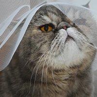 И котики в фате... :: Ирина Лежнева
