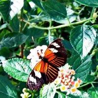 Бабочка :: Liudmila LLF