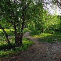 Такими дорожками я буду долго гнать велосипед :: Андрей Лукьянов