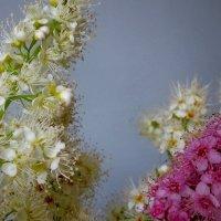 Бело-розовые :: OLLES
