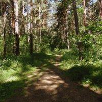 Лесными тропами . :: Мила Бовкун