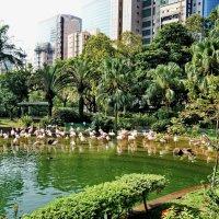 Фламинго в парке Kowloon :: Андрей K.