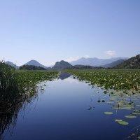 Скадарское озеро :: Tatiana Belyatskaya