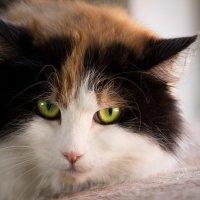 ЛАСКА, Центр помощи кошкам на Сахалине https://vk.com/laskasakhalin. Габи :: Margarita Ласковая