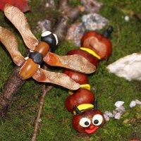 Гусеница и стрекоза из каштанов, желудей, ясенелистного клёна и пластилина :: Dmitry Saltykov