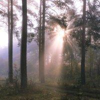 сиреневый туман :: Василий И Иваненко