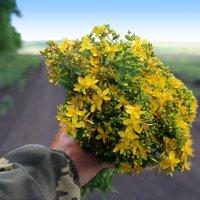А вы заготавливаете травы целебные?:) :: Андрей Заломленков