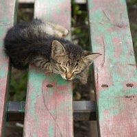 маленький хозяин большой скамейки.... :: Наталья Меркулова