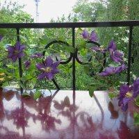 Клематис на балконе :: Ирина