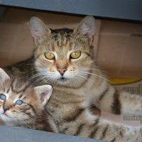 Мать и дитя :: Наталия П