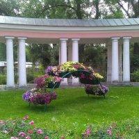 Красочная клумба у Казачьего собора. (Санкт-Петербург). :: Светлана Калмыкова