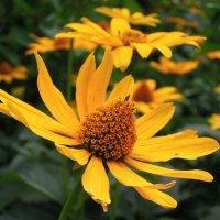 Цветочная дорожка в лето :: Тамара Бедай