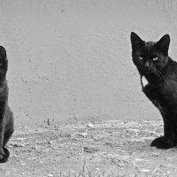 Жил да был чёрный кот... :: Наталия П
