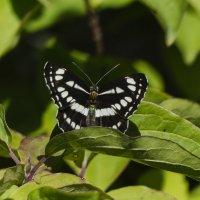 бабочка :: Алексей Руднев