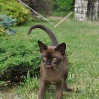 Котенок на зеленой траве. :: Лариса Вишневская