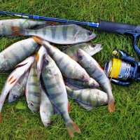 Спиннинговая рыбалка в Царицыно :: Константин Анисимов