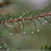 После дождя :: Анастасия Сосновская