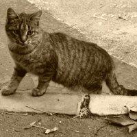 Обычная кошка :: Дмитрий Никитин