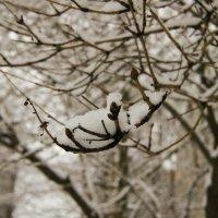 Пригоршня снега в руке. :: Александр Горячев